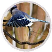 Flight Of The Blue Jay Round Beach Towel