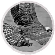 Flight Of The Osprey Bw Round Beach Towel