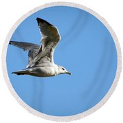 Flight Of The Seagull Round Beach Towel by Ray Congrove
