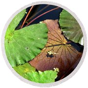 Floating Lily Pads Round Beach Towel