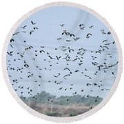 Flock Of Beautiful Migratory Lapwing Birds In Clear Winter Sky Round Beach Towel