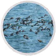 Round Beach Towel featuring the photograph Flock Of Birds by Trace Kittrell