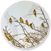 Flock Of Cedar Waxwings  Round Beach Towel by Geraldine Scull