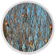 Flock Of Finches Round Beach Towel