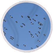 Flock Of Migratory Lapwing Birds In Clear Winter Sky Round Beach Towel