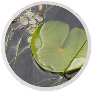 Round Beach Towel featuring the photograph Flooded Pad by Betty-Anne McDonald