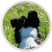 Round Beach Towel featuring the photograph Floppy Ear by Ann E Robson