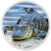 Florida Alligator Closeup Round Beach Towel