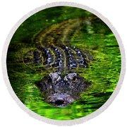 Florida Alligator Encounter Round Beach Towel