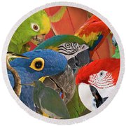 Florida Birds Round Beach Towel