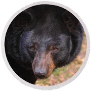 Florida Black Bear Round Beach Towel