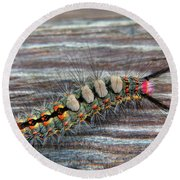 Florida Caterpillar Round Beach Towel