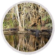 Round Beach Towel featuring the photograph Florida Gators - Everglades Swamp by Jerry Battle