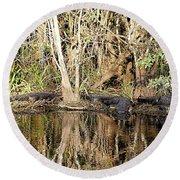 Florida Gators - Everglades Swamp Round Beach Towel