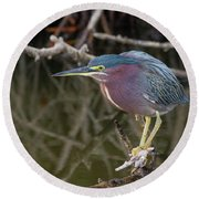 Florida Green Heron Round Beach Towel