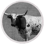 Florida Longhorn Black And White Photo Round Beach Towel