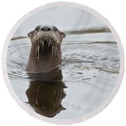 Florida Otter Round Beach Towel
