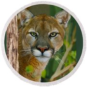 Florida Panther Round Beach Towel by Larry Nieland