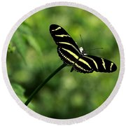 Florida State Butterfly Round Beach Towel