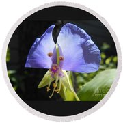 Round Beach Towel featuring the photograph Flower Face by Felipe Adan Lerma