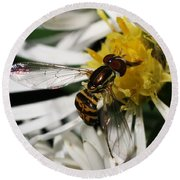 Round Beach Towel featuring the photograph Flower Fly On Wildflower by William Selander