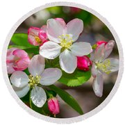 Flowering Cherry Tree Blossoms Round Beach Towel