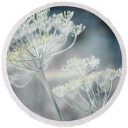 Round Beach Towel featuring the photograph Flowering Dill Clusters by Elena Elisseeva