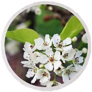Flowering Pear Close Up Round Beach Towel