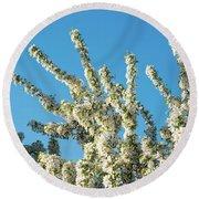 Flowering Pear Tree Number 2 Round Beach Towel