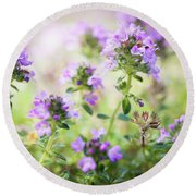 Round Beach Towel featuring the photograph Flowering Thyme by Elena Elisseeva