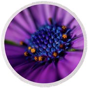 Round Beach Towel featuring the photograph Flowers And Sand by Darren White
