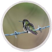Fluffy Hummingbird Round Beach Towel