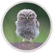 Fluffy Little Owl Owlet Round Beach Towel