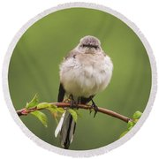 Fluffy Mockingbird Round Beach Towel by Terry DeLuco