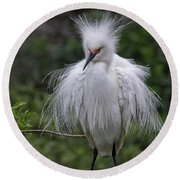 Fluffy Snowy Egret Round Beach Towel