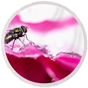 Round Beach Towel featuring the photograph Fly Man's Floral Fantasy by T Brian Jones