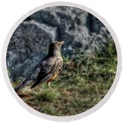 Round Beach Towel featuring the photograph Fly Robin Fly by Pennie  McCracken
