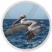 Flying Brown Pelican Round Beach Towel by Robert Bales