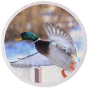 Flying By Round Beach Towel