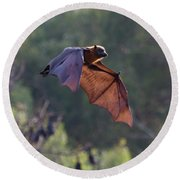 Flying Fox In Mid Air Round Beach Towel