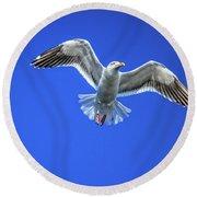 Flying Gull Round Beach Towel by Robert Bales