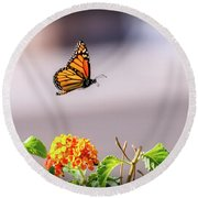 Flying Monarch Butterfly Round Beach Towel by Robert Bales
