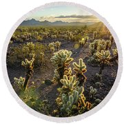 Round Beach Towel featuring the photograph Sea Of Cholla by Margaret Pitcher