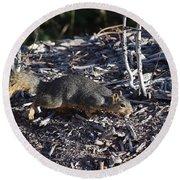 Squirrel Pprh Woodland Park Co Round Beach Towel