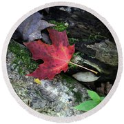 Forest Floor In Autumn Round Beach Towel by Brooke T Ryan