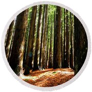 Round Beach Towel featuring the photograph Forest Glade by Marion Cullen