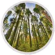 Forest Of Light Round Beach Towel