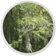 Forest On A Swamp Round Beach Towel