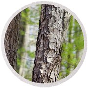 Round Beach Towel featuring the photograph Forest Trees by Christina Rollo