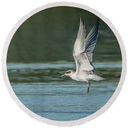 Forster's Tern 092017-5021-1cr Round Beach Towel